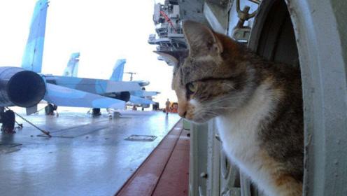 二战中最晦气的猫,使5艘军舰沉没,英德海军都中招
