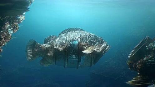 太多垃圾沉入大海,导致海底变地狱,海洋动物也都与垃圾合二为一