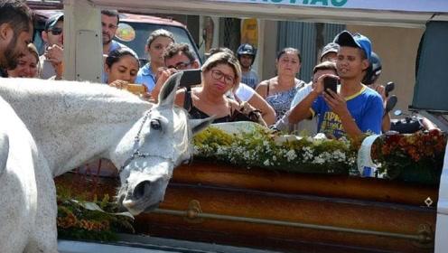 主人去世,马儿通人性参加葬礼,竟直接低下了马头!