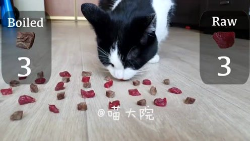 喵咪大测试,爱吃生牛肉还是熟牛肉,你的猫呢?