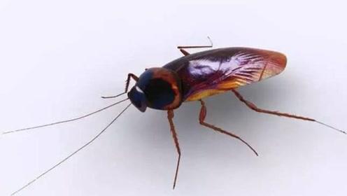 灭蟑螂别再买蟑螂药了,只需一点香蕉皮,蟑螂死光光,安全又实用