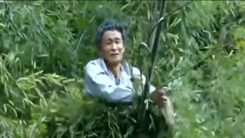 60岁老人练成真实版轻功 可在在竹子上飞行