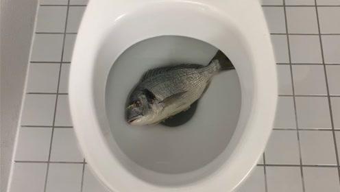 作死老外将鱼扔进马桶,按下冲水的一瞬间,意外发生!