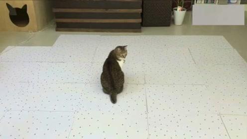 纸上画1000粒猫粮,考验喵星人眼力,把猫给转晕了!
