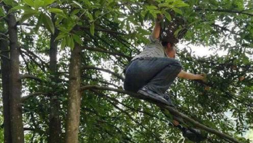 山竹为何被称作贵族水果,原来采摘这么麻烦,困惑解开了