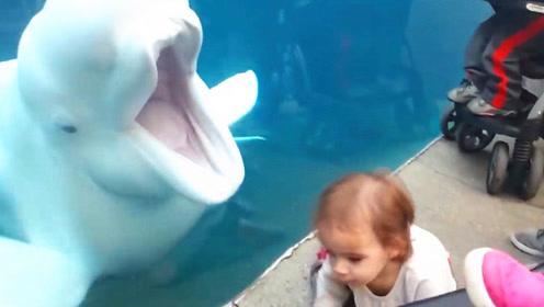 白鲸突然一个动作把小娃吓倒在地,网友:这么皮的鲸,第一次见