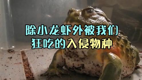 除了小龙虾,还有哪些入侵物种被中国人吃到没尊严呢?