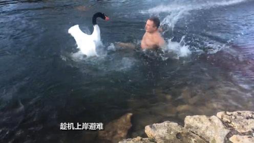 老鹰猛地加速冲进水中,众人十分不解,原来是来报仇的