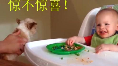 宝宝在餐椅自己吃饭,太逗乐了,爸爸拿狗狗逗宝宝玩