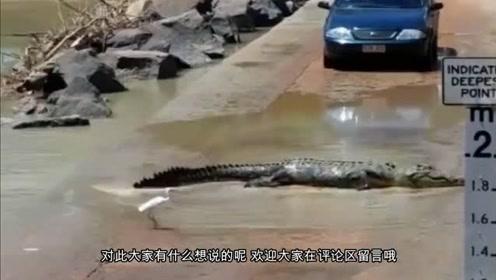 连夜暴雨冲刷河堤,司机在路边发现怪物,镜头拍下全过程