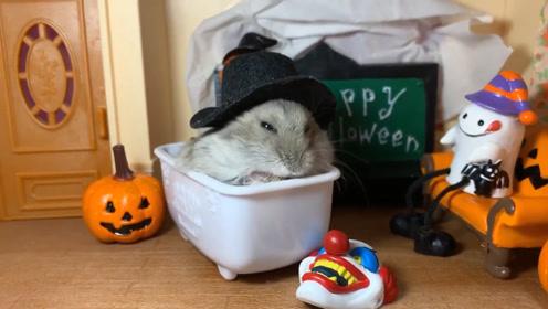小仓鼠带着帽子,悠闲的在浴缸里吃着东西!