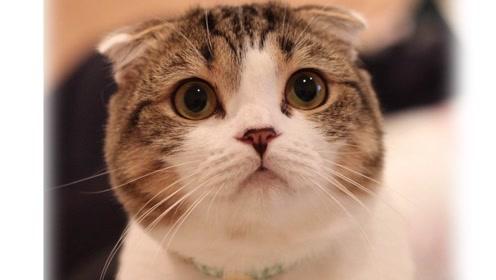 活动 圆脸小猫1——根据手稿做形的分析