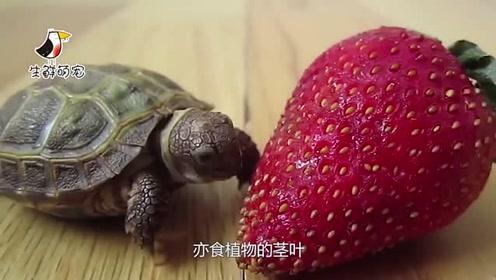 水中霸主鳄鱼竟咬不碎乌龟甲壳?网友:称号是自封的吧?