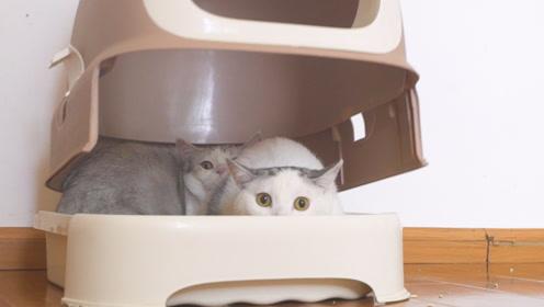 请了一个摄影师上门拍猫,猫咪吓得抖成筛子,主人哭笑不得