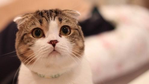 活动 圆脸小猫6——脸部毛发塑造