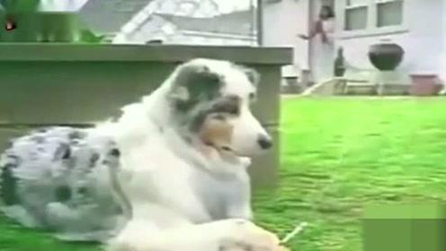 这抽烟的手法,一看就是一只有故事的狗啊!绿油油的草地啊!