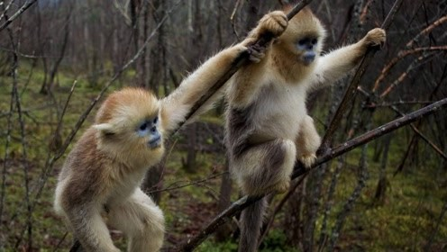 棒针猴子花样图解