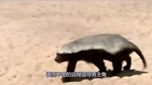 吃屄色情�_最记仇的动物,从沙漠这边追到沙漠那边,锲而不舍的恒心!