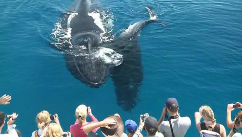 坐船偶遇鲸鱼,还与乘客互动起来