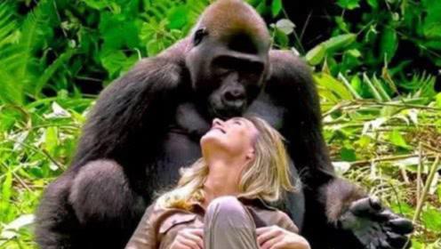 艾滋病源自非洲大猩猩,人类是如何被感染的?真相令人愤怒