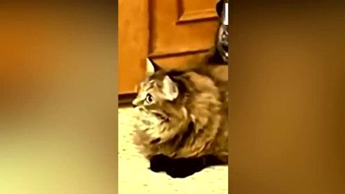 宠物也疯狂,超搞笑宠物视频来袭!