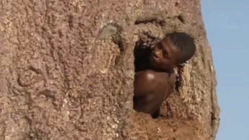 """非洲人民的""""万能树"""",不仅能吃能喝,甚至还能当房屋居住"""