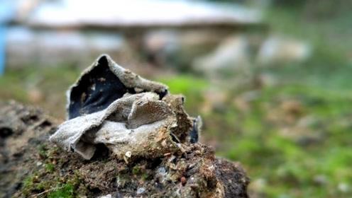 农村长新鲜野生菌,不能随意食用或有毒,却受人喜爱