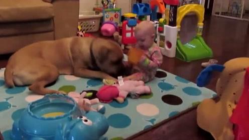 萌娃与大狗狗之间的恩恩怨怨,哈哈大笑,宝宝也很喜欢大狗狗呢