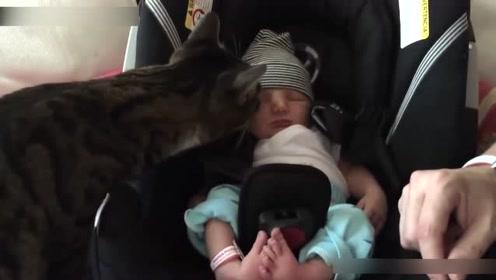 猫咪第一次见刚出生的小宝宝,它这个反应,简直太可爱了!