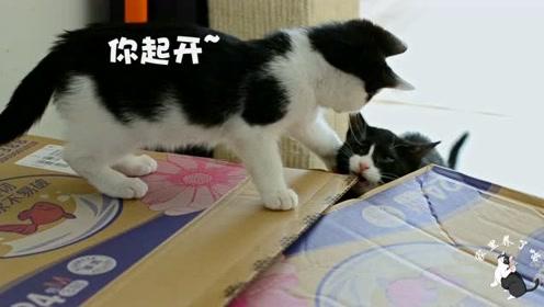 包裹到了,现场一片混乱,主人差点昏倒:看看猫咪们都干了什么!
