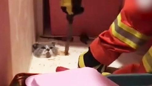 猫宝宝太调皮遭卡头,这只傻喵就演绎了啥是喵生艰难!
