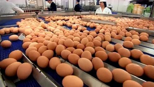 超市的鸡蛋不是母鸡下的?实拍鸡蛋生产全程,网友:眼界大开!