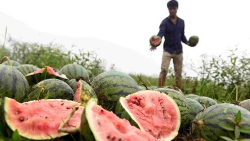 安徽贫困户种植10万西瓜滞销,低价促销无人收,如今快要烂地里