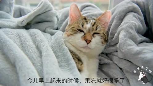 流浪小猫又生病了,这次住进VIP病房,风景优美,还有暖床服务