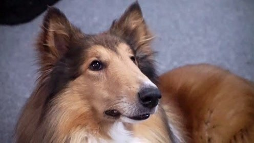 狗狗挑食只想吃零食时 主人应该这么做呢?