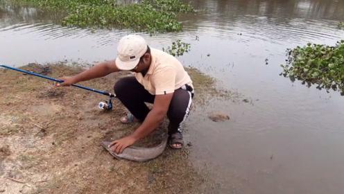 用动物内脏钓这种鱼,第一杆就钓条大的,太快了