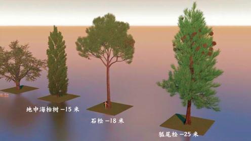 从野草到千年红杉 2分钟全球植物体型大比拼