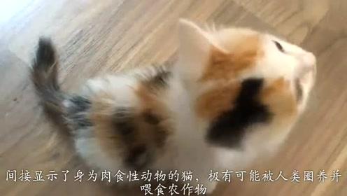 古人口中的猫与现在的猫咪是同一物种吗?答案可能不敢相信!