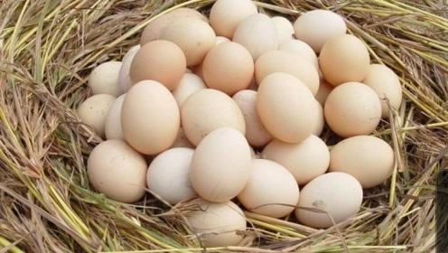 1分钟教你如何辨别土鸡蛋和普通鸡蛋?从此不花冤枉钱