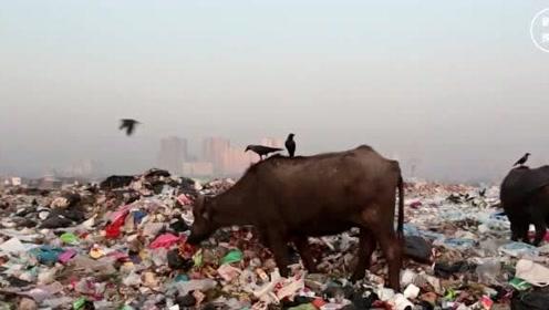 韩国垃圾成山是中国错?要求中国帮忙解决,我国做出了满分的回应