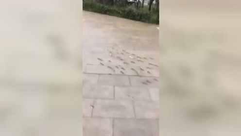 台风来临山东普降暴雨 滨州街头现鱼群上路