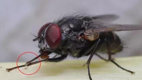 """为什么苍蝇不停地""""搓手脚""""?难道它们是因为冷吗?多年疑惑解开"""