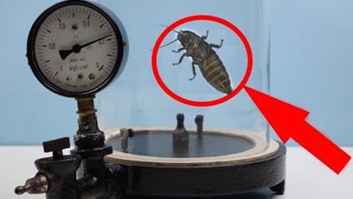 小伙好奇实验,将蟑螂放玻璃杯抽走氧气,结局令人不可思议!