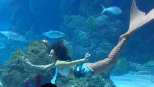 海洋馆里的美人鱼,美丽优雅表演惊艳,但工作的背后却十分艰辛!
