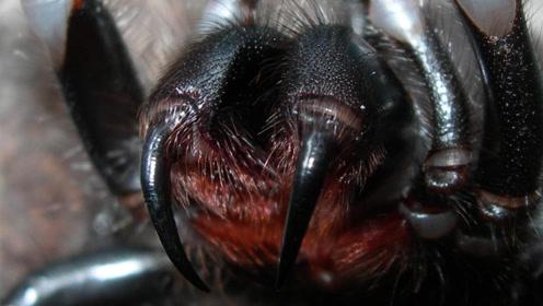 世界上最危险的昆虫Top10,看见它们最好马上跑开!