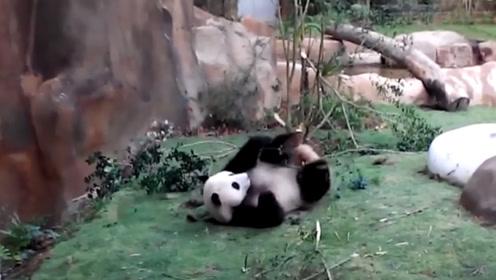 """功夫熊猫再现江湖 一招一式展现""""武林盟主""""风范"""