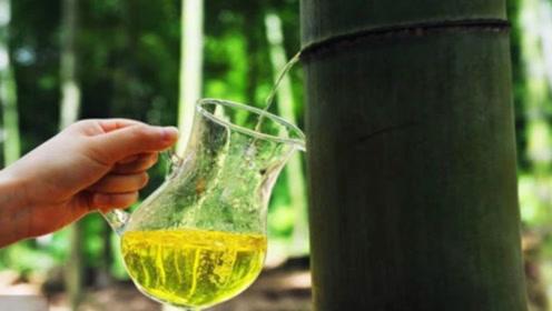 网上爆红的竹子酒,真是直接从竹子里取出的?真实答案让人气愤!