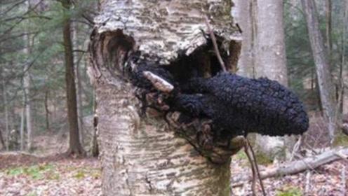 广西老农树上发现神秘物体,拿给专家鉴定:你赚大了!