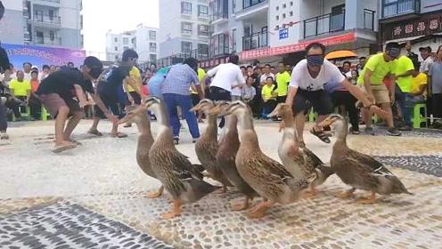爆笑连连!村民蒙眼抓鸭,有人鞋都跑掉了