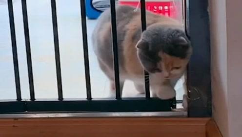 别再说我家猫咪胖了,事实证明,再胖的猫也是液体!